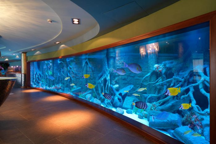 11 meters long sea water aquarium
